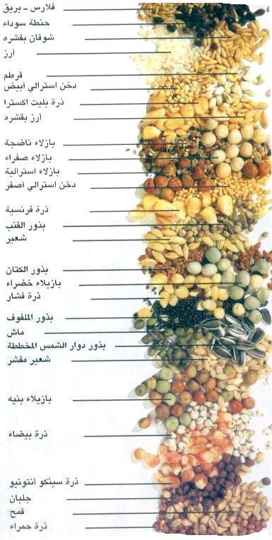 غذاء الزيبرا  Fedoc0001