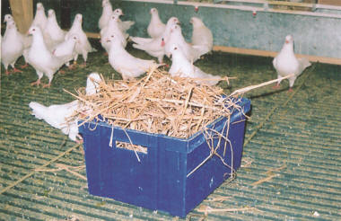 The Pigeons House بيت الحمام